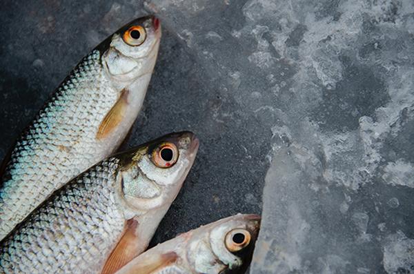 vissen in de viswinkel voor verkoop