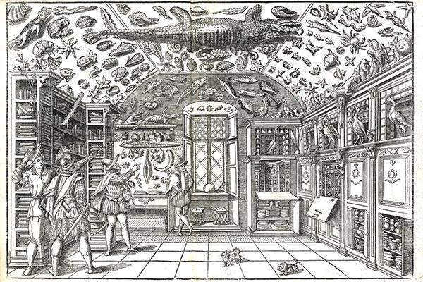 cabinet o curiosities